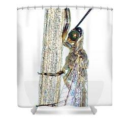 Adult Ant Lion Shower Curtain