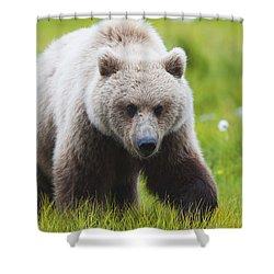 Adult Brown Bear Walking Amongst Shower Curtain by Lorraine Logan
