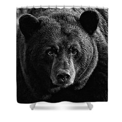 Shower Curtain featuring the photograph Adult Male Black Bear by Coby Cooper