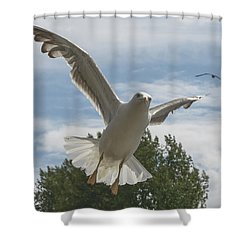 Adult Seagull In Flight Shower Curtain