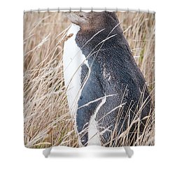 Adult Yellow-eyed Penguin 2 Shower Curtain