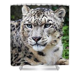 Adult Snow Leopard Portrait Shower Curtain
