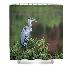 Shower Curtain featuring the photograph Advice From A Great Blue Heron by Cindy Lark Hartman