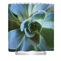 Aeonium Shower Curtain by Marna Edwards Flavell