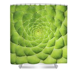 Aeonium Tabuliforme Pattern Shower Curtain