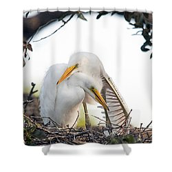 Affectionate Chicks Shower Curtain