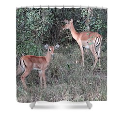 Africa - Animals In The Wild 2 Shower Curtain