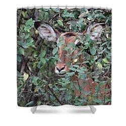 Africa - Animals In The Wild 4 Shower Curtain