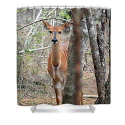 Africa Safari Bushbuck 2 Shower Curtain