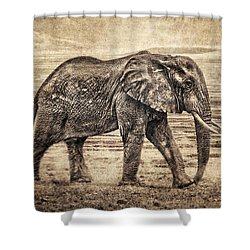 Africa Series - Elephant Shower Curtain by Brett Pfister