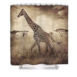 Africa Series - Giraffe Shower Curtain by Brett Pfister