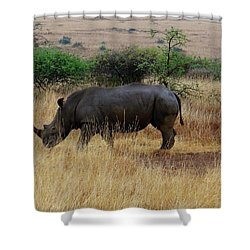 African Animals On Safari - One Very Rare White Rhinoceros Right Angle With Background Shower Curtain