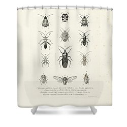 African Bugs And Insects Shower Curtain