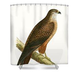 African Buzzard Shower Curtain