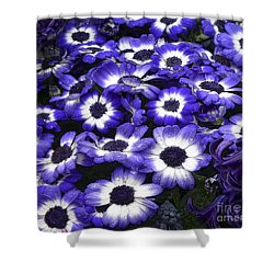 African Daisy Purple And White Shower Curtain by Dee Flouton