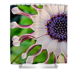 African Daisy Squared Shower Curtain by TK Goforth