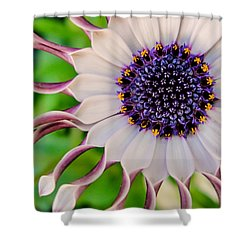 African Daisy Shower Curtain by TK Goforth