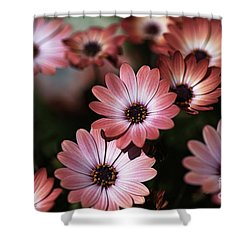 African Daisy Zion Red Shower Curtain by Joy Watson