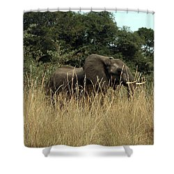 African Elephant In Tall Grass Shower Curtain