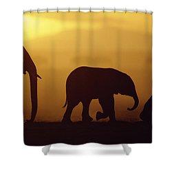 African Elephant Loxodonta Africana Shower Curtain by Karl Ammann