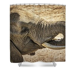 Shower Curtain featuring the photograph African Elephant by Mitch Shindelbower