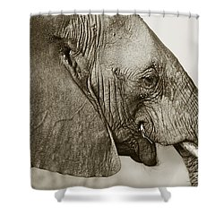 African Elephant Profile  Duotoned Shower Curtain by Liz Leyden
