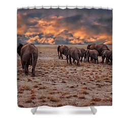 African Elephants Shower Curtain by Anthony Dezenzio
