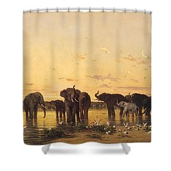 African Elephants Shower Curtain by Charles Emile de Tournemine