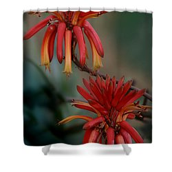 African Fire Lily Shower Curtain