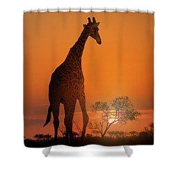African Giraffe Walking At Sunset Shower Curtain by Susan Schmitz