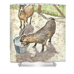 African Goats Shower Curtain