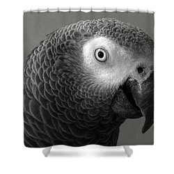 African Gray Shower Curtain