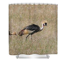 African Grey Crown Crane Shower Curtain