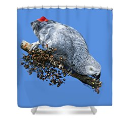African Grey Parrot A Shower Curtain by Owen Bell