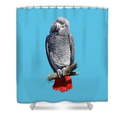 African Grey Parrot C Shower Curtain by Owen Bell
