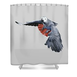 African Grey Parrot Flying Shower Curtain by Owen Bell
