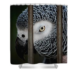 African Grey Shower Curtain by Robert Meanor