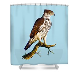 African Hawk Eagle Shower Curtain