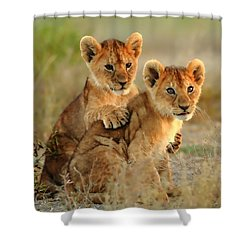 African Lion Cubs Shower Curtain