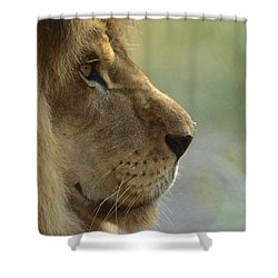 African Lion Panthera Leo Male Portrait Shower Curtain by Zssd