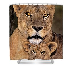Shower Curtain featuring the photograph African Lions Parenthood Wildlife Rescue by Dave Welling