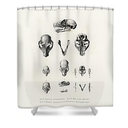 African Mammal Skulls Shower Curtain