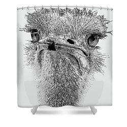African Ostrich Sketch Shower Curtain