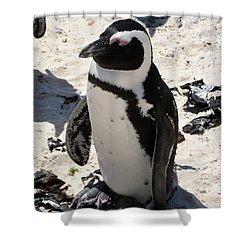 Shower Curtain featuring the digital art African Penguin 1 by Eva Kaufman