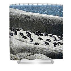 Shower Curtain featuring the digital art African Penguin 4 by Eva Kaufman