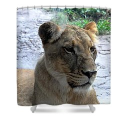Shower Curtain featuring the photograph African Queen by John Black