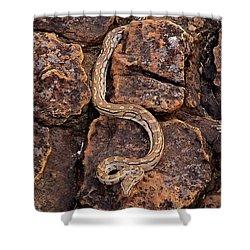African Rock Python Shower Curtain by John Cancalosi