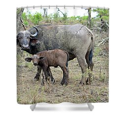 African Safari Mother And Baby Buffalo Shower Curtain by Eva Kaufman