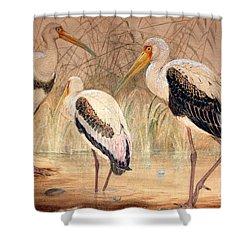 African Tantalus Pseudotantalus Ibis Shower Curtain