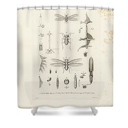 Superb African Termites And Their Anatomy Shower Curtain